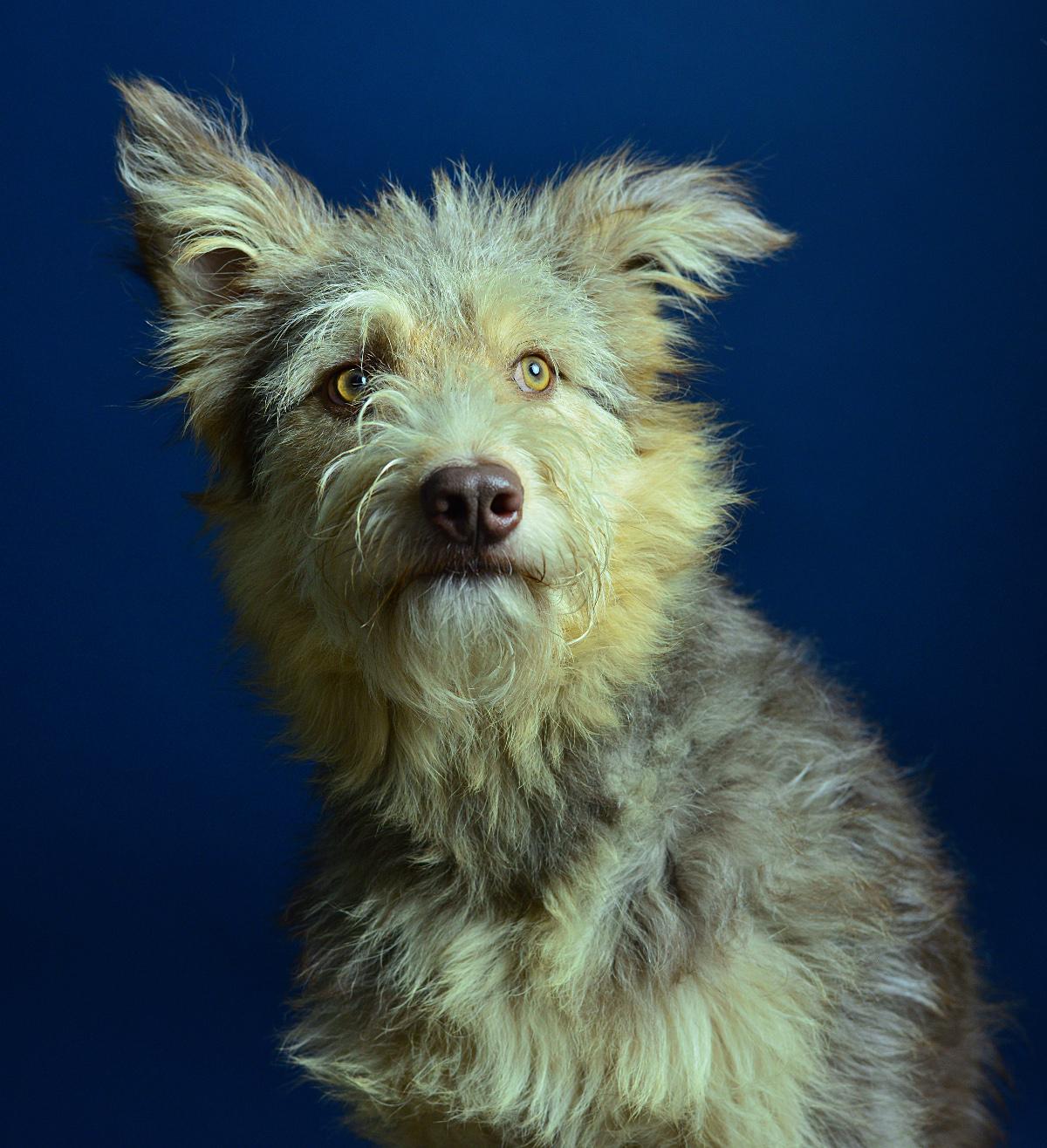 hond fotoshoot meijboom