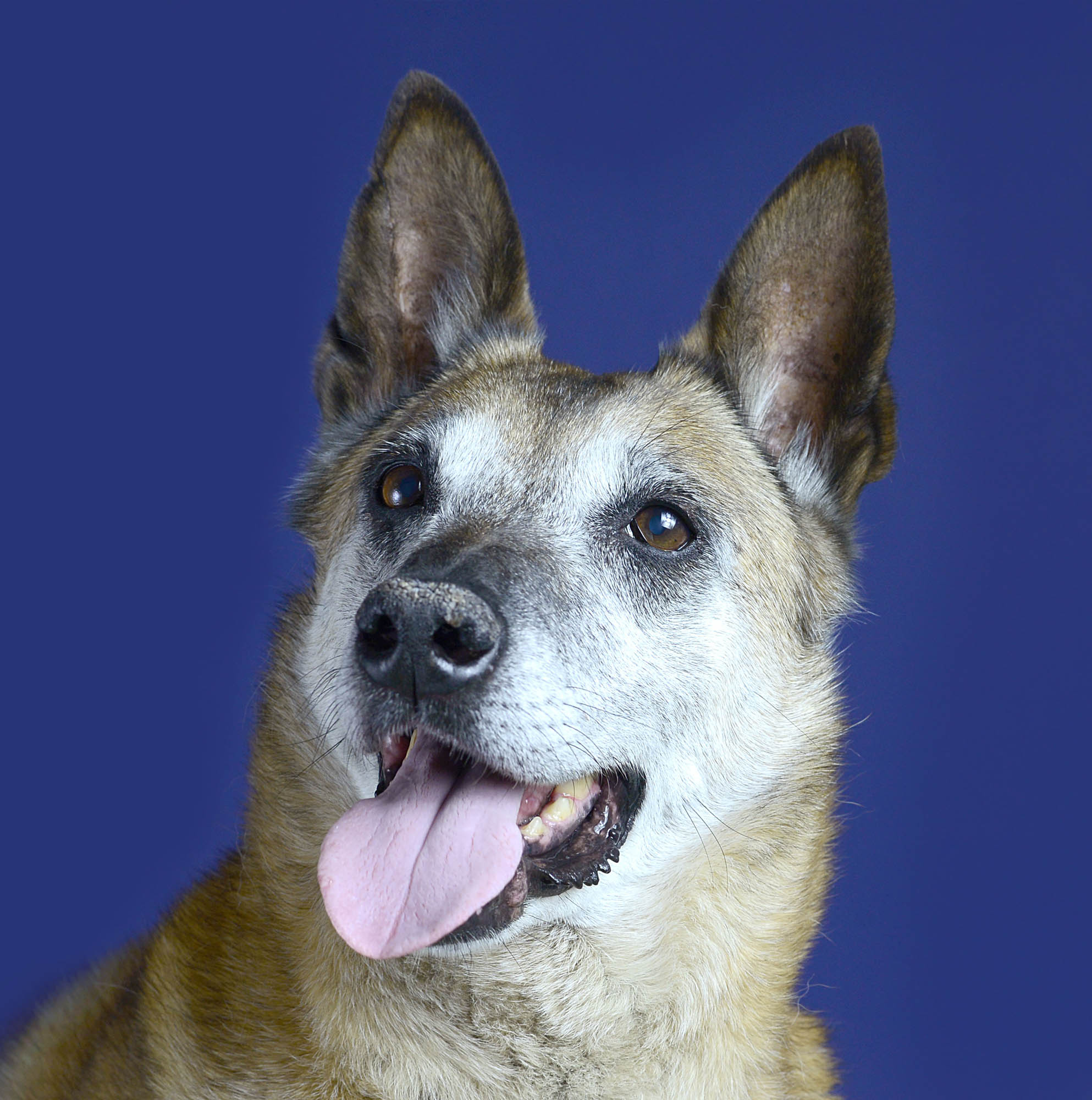 honden-fotoshoot-meijboom-gouda