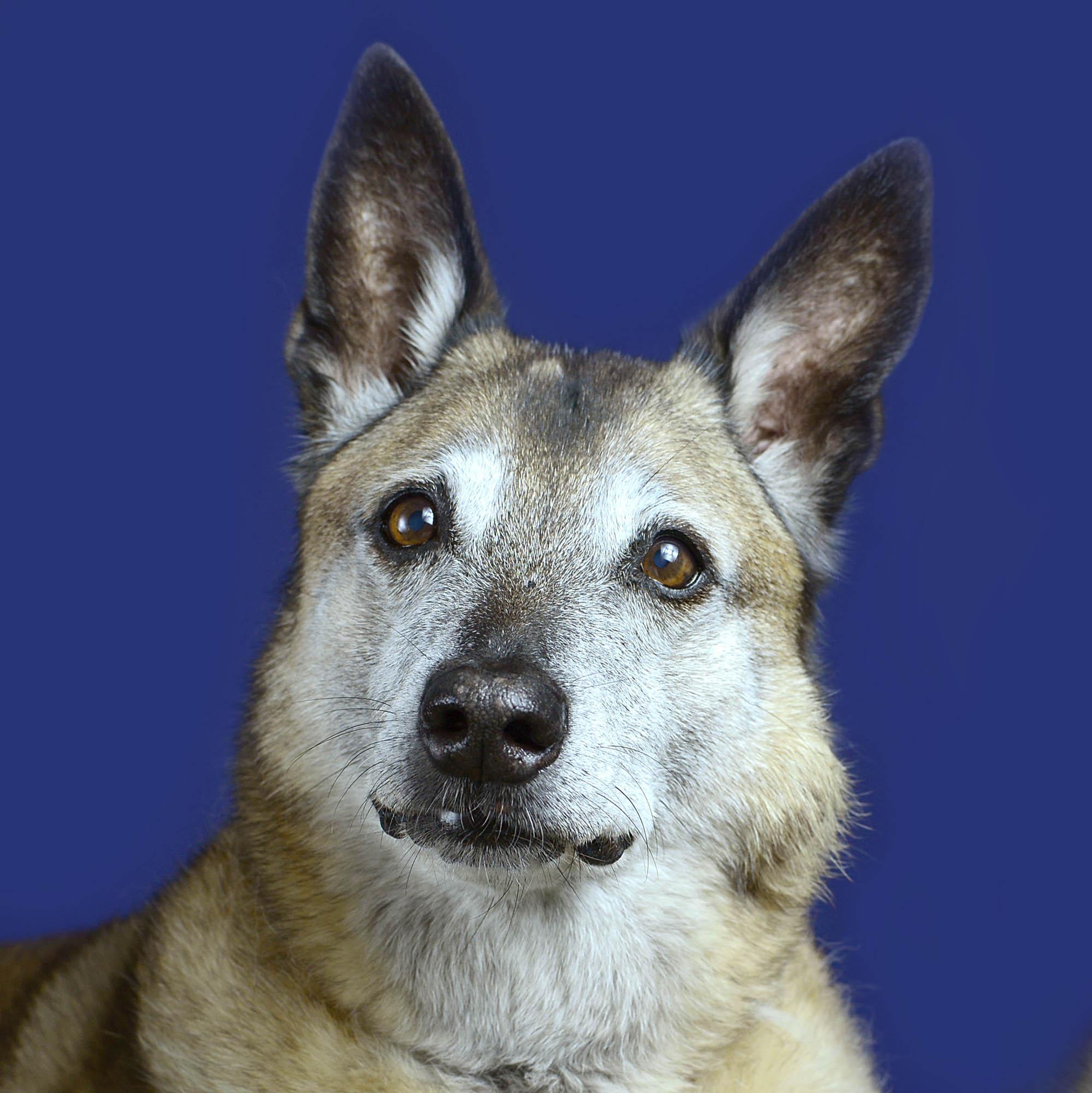 hond-fotoshoot-meijboom-gouda